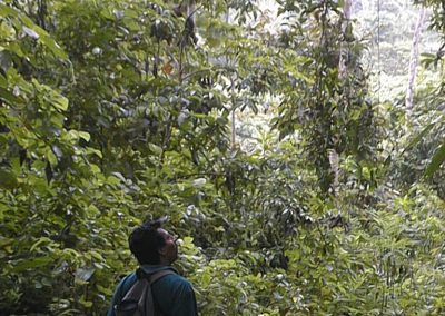 Rainforests to be explored