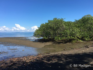 Mangroves along the Golfo Dulce