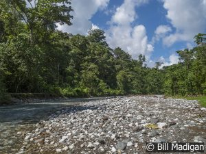 The Rio Tigre near Corcovado National Park, Costa Rica