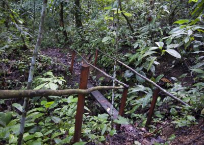 The Ocelot Trail, located on our preserve