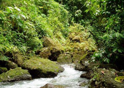 Rio Pizote