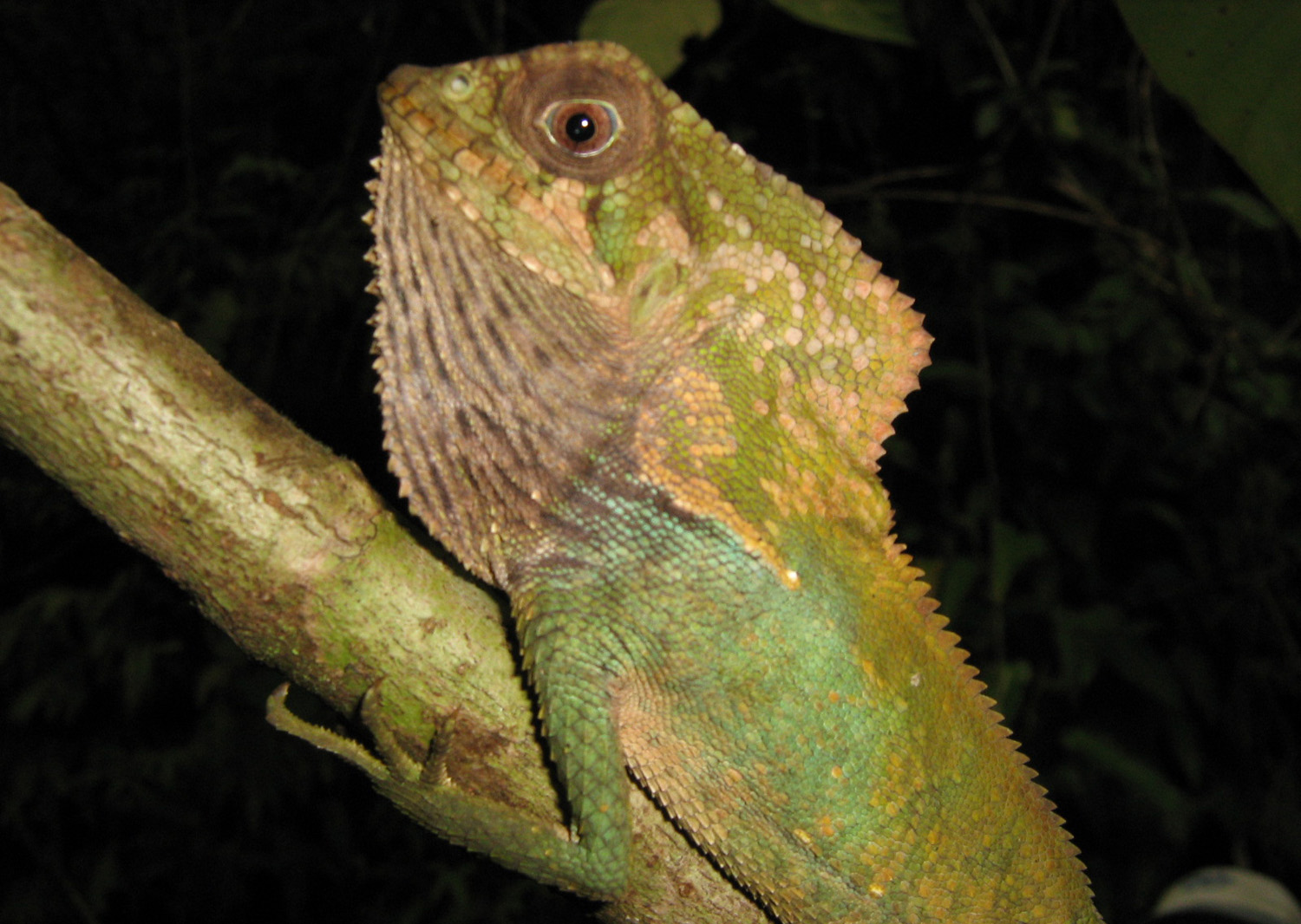 One of Costa Rica's igunas that can be seen from the lodge