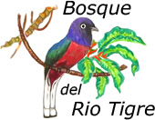 Bosque del Río Tigre Lodge