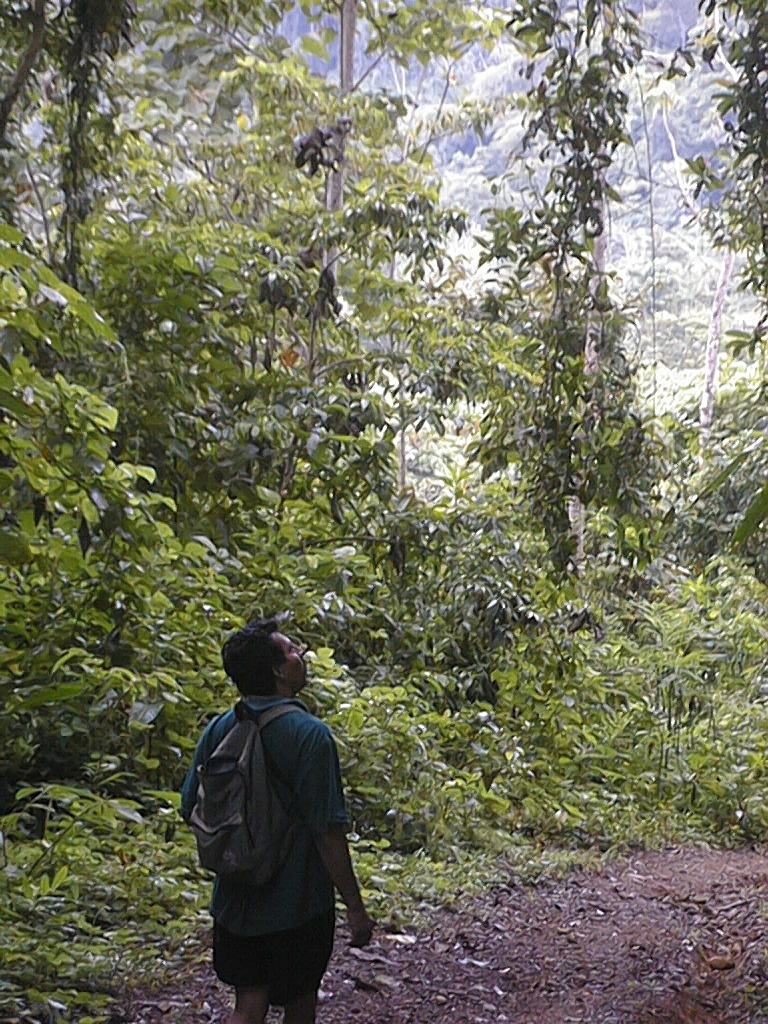 explore Osa and her forests