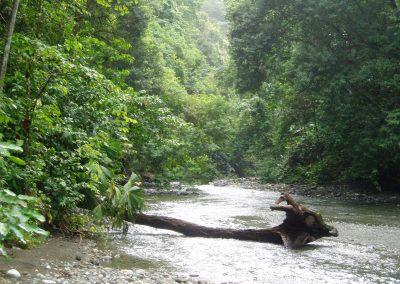 Beautiful forested rivers