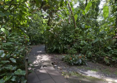 Forested walkway to the private cabina