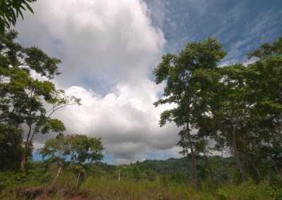 View of the surrounding rainforest from a ridge near Dos Brazos. Photo by Jeff Zuhlke