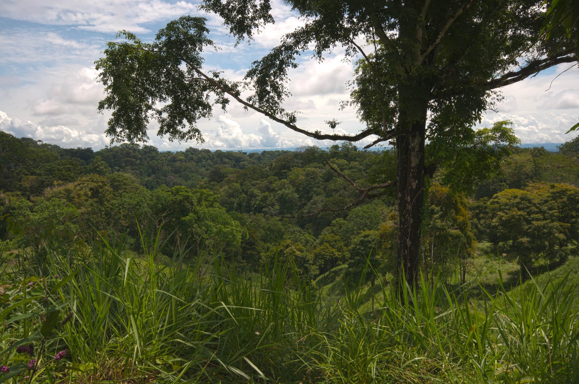 Top of the ridge near Bosque del Rio Tigre Lodge