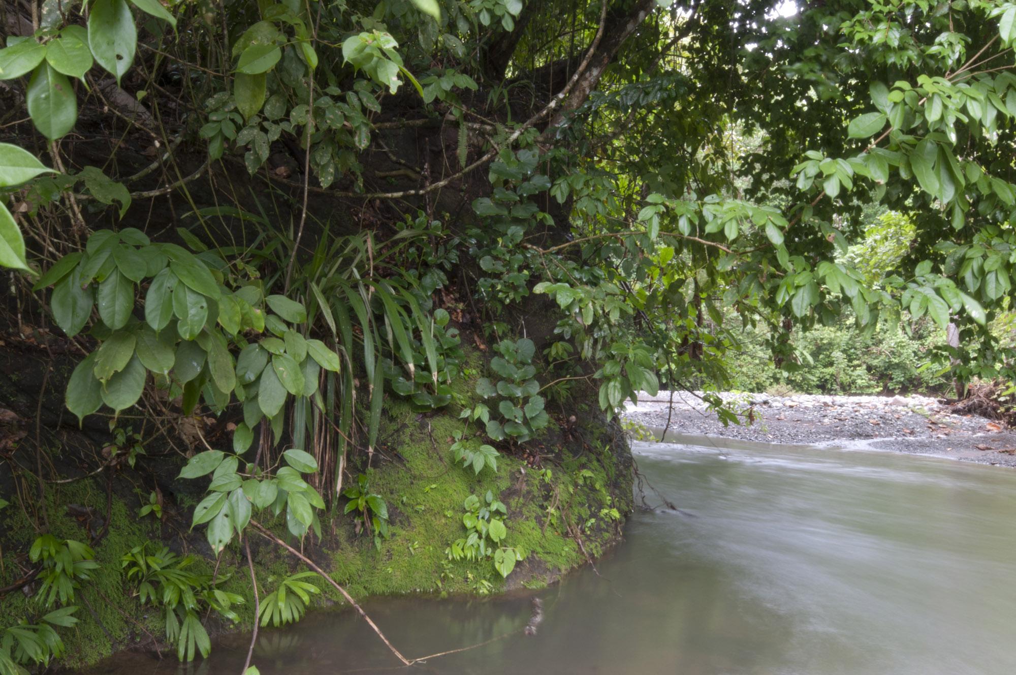 Rio Tigre in front of the Bosque del Rio Tigre Lodge