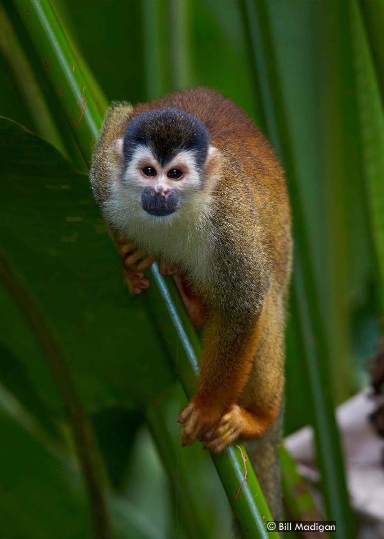 Mammals, Corcovado National Park, Osa Peninsula