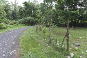 The road is good for birding in Dos Brazos, Osa Peninsula, Puerto Jimenez, Costa Rica Photo by Jeff Zuhlke