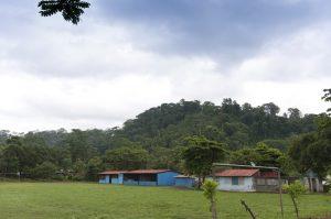 Primary rainforest in the hills, Dos Brazos, Osa Peninsula, Puerto Jimenez, Costa Rica. Photo by Jeff Zuhlke